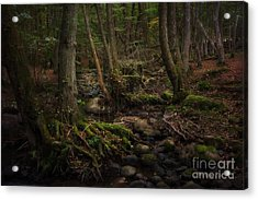 Roots Acrylic Print by Rikard Strand