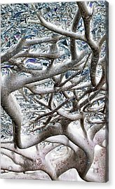 Roots With Attitude Acrylic Print