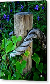 Rope And Vine Acrylic Print by Lyle  Huisken