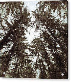 Acrylic Print featuring the photograph Rorschach Trees by Karen Stahlros