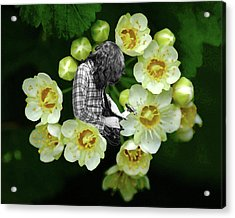 Acrylic Print featuring the photograph Rory Flower by Ben Upham