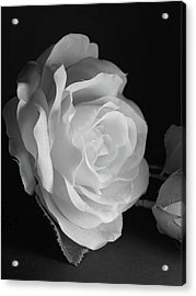 Rosa -monochrome Acrylic Print