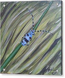 Rosalia Alpina Acrylic Print by Judit Szalanczi
