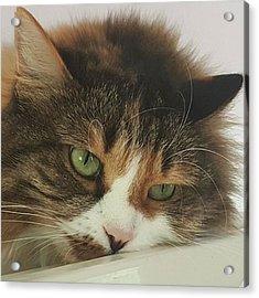 rosalie #cats #cat #pets #photo Acrylic Print