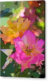Rose 114 Acrylic Print by Pamela Cooper