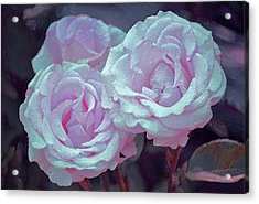 Rose 118 Acrylic Print by Pamela Cooper