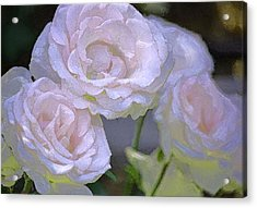Rose 120 Acrylic Print by Pamela Cooper
