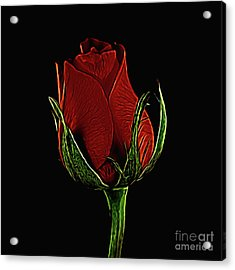 Rose 123 Acrylic Print