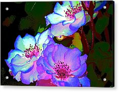 Rose 127 Acrylic Print by Pamela Cooper