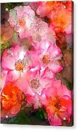 Rose 140 Acrylic Print by Pamela Cooper
