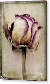 Rose 2 Acrylic Print by Marion Galt