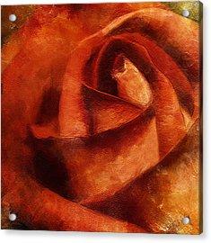Rose 4854 Acrylic Print