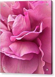 Rose Affair Acrylic Print by Gwyn Newcombe