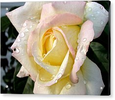 Acrylic Print featuring the photograph Rose And Raindrops by Cynthia Lassiter