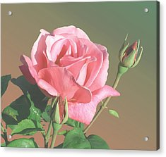 Rose And Two Buds Acrylic Print by Wilbur Young