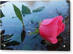 Rose And Water. Acrylic Print by Nereida Slesarchik Cedeno Wilcoxon