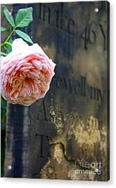 Rose At The Grave Acrylic Print
