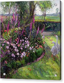 Rose Bed And Geese Acrylic Print by Timothy Easton