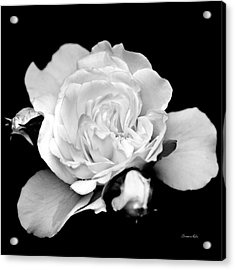 Acrylic Print featuring the photograph Rose Black And White by Christina Rollo