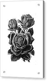 Rose Black Acrylic Print