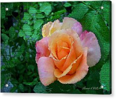 Acrylic Print featuring the photograph Rose by Bonnie Willis