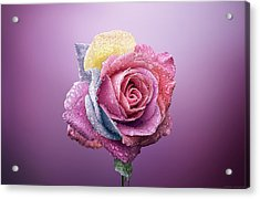 Rose Colorfull Acrylic Print