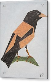 Rose-coloured Starling Acrylic Print