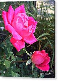 Rose Duet Acrylic Print