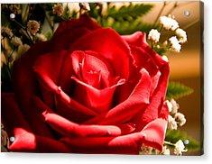 Rose For My Valentine Acrylic Print by Thomas R Fletcher