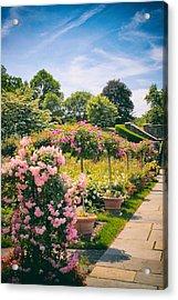Rose Garden Allee  Acrylic Print