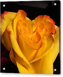 Acrylic Print featuring the photograph Rose Heart by Margaret Bobb