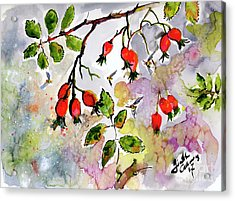 Rose Hips And Bees Watercolor And Ink Acrylic Print