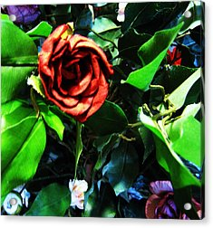 Rose Acrylic Print by HollyWood Creation By linda zanini