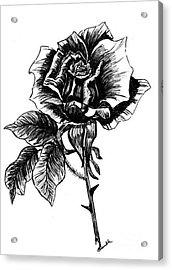 rose I  Acrylic Print by Nancy Rucker