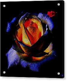Rose II Acrylic Print by Mohammed Nasir