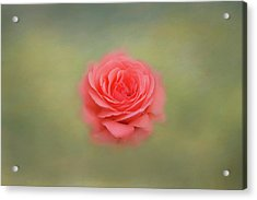 Acrylic Print featuring the photograph Rose Impressions by Kim Hojnacki