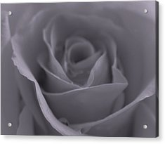 Rose In Black And White  Acrylic Print by Juergen Roth