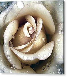 Acrylic Print featuring the photograph Rose In Gold With Water Drops by Julie Palencia
