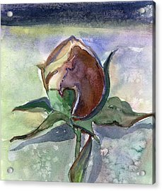 Rose In The Snow Acrylic Print by Mindy Newman