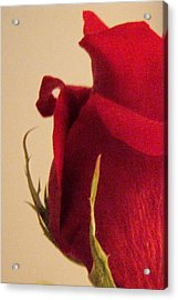 Rose Acrylic Print by Kristine Nora
