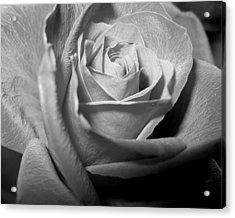 Rose Acrylic Print by Lindsey Orlando