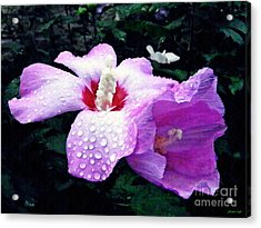 Rose Mallow After The Rain Acrylic Print