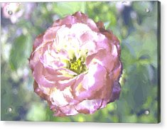 Rose Acrylic Print by Maria Freeman