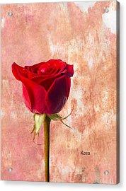 Rose Acrylic Print by Mark Rogan