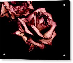 Rose Acrylic Print by Mohammed Nasir