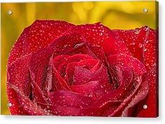 Rose N Gold Acrylic Print
