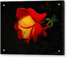 Acrylic Print featuring the photograph Rose Of Fire by Joyce Dickens