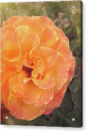 Rose Of Seville Acrylic Print by JAMART Photography