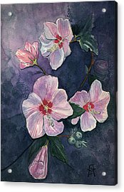 Rose Of Sharon Acrylic Print by Katherine Miller