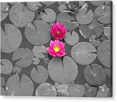 Rose Of The Water Acrylic Print